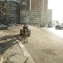 horse pulling a wagon on the streets of Alexandria, Egypt