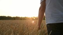 a man walking through a field of golden wheat