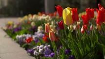 spring flowers in a flower garden blowing the breeze