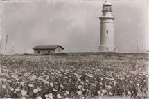 old lighthouse near a field of flowers