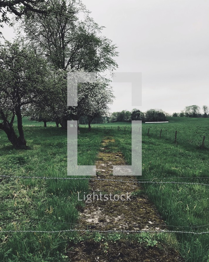 barbed wire fence and green rural landscape