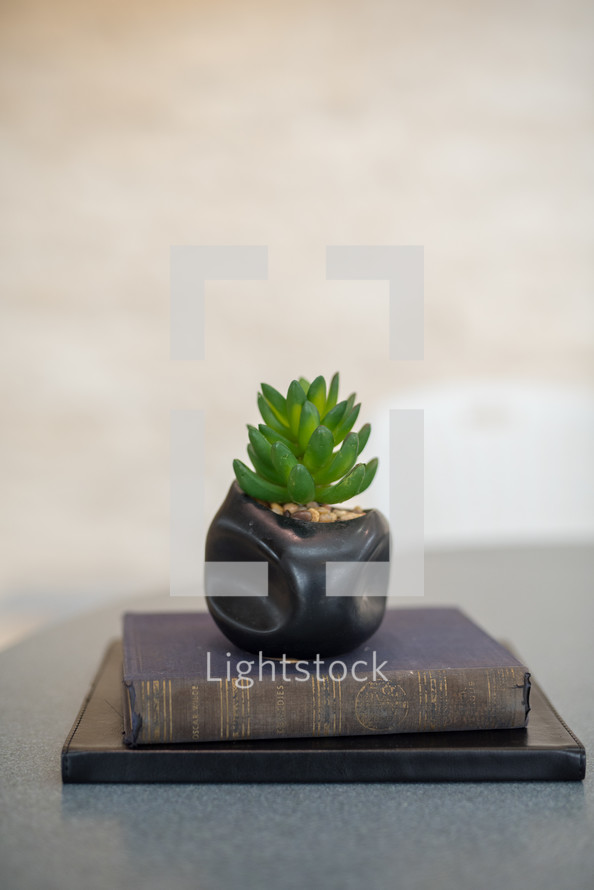 house plant on a stack of books