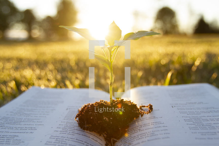 sun shining on a plant growing between the pages of the Bible