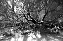 wild bush branches