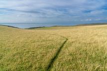 worn path through a field of green grass