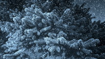 falling snow on evergreen branches