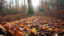 fall leaves on a forest floor