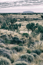 desert Outback landscape