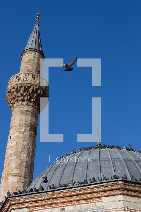 Pigeons on a mosque