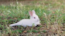 resting bunny rabbit in the grass