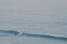 a surfer caught a wave