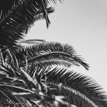 Minimal black texture background palm tree