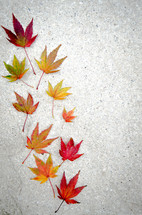 autumn leaves on concrete