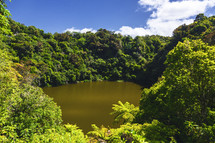 green pond surrounded by lush vegetation in Waimangu