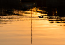 A duck swims in the reflection of the sun.