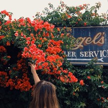 Hand reaching up into flowering bush near a metal sign.