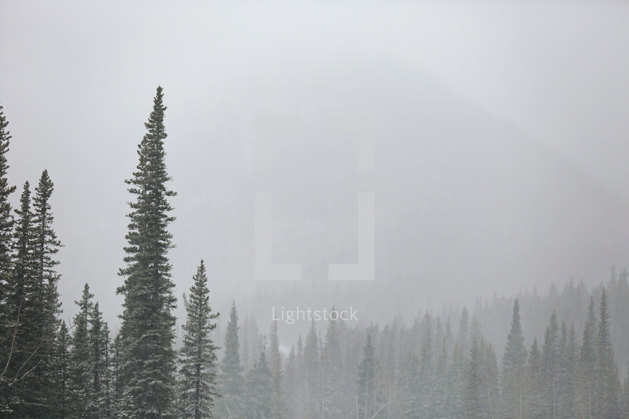 misty mountain and forest background with snow
