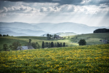 sunbeams shining on a meadow of dandelions