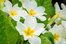 wet white flowers