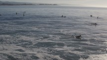 Surfers paddling and waiting for waves.