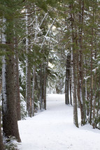 snow covering a forest floor