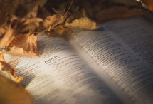 pages of a Bible lying in fall leaves