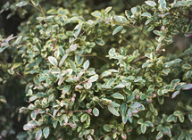 green leaves on a bush
