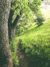 path on green hills