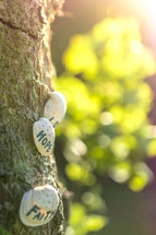 faith, hope, and love on seashells on a tree
