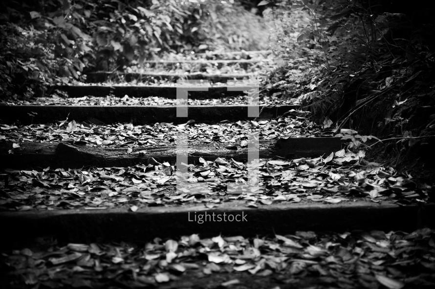 deserted railroad tracks in woods