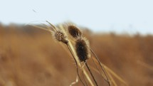 dried plant in a field