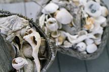 basket of found sea shells