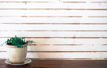 weathered white wood background and house plant