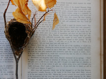 branch with bird nest on the pages of a book