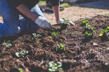 Planting a garden.