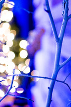 tree branch and bokeh lights