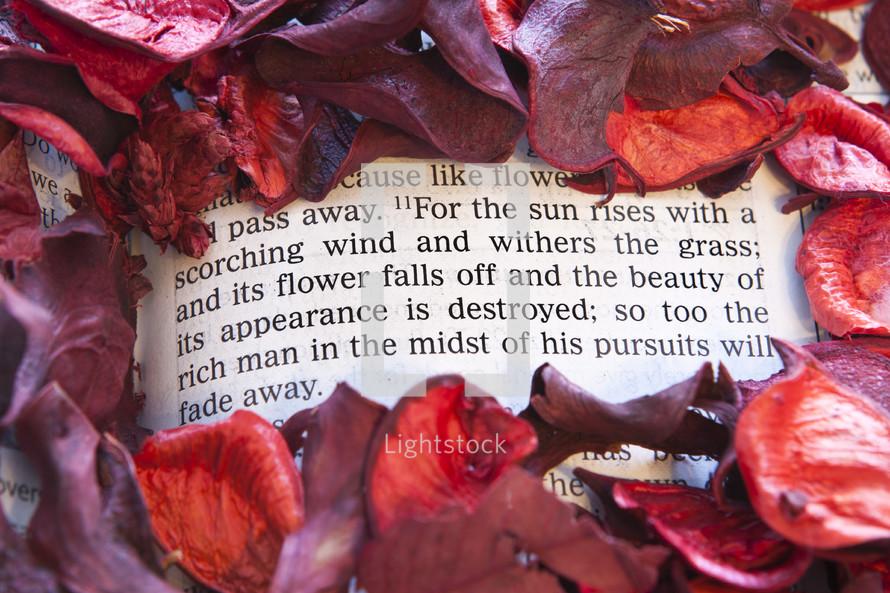 Red flower petals surrounding Bible open to James 1:11.