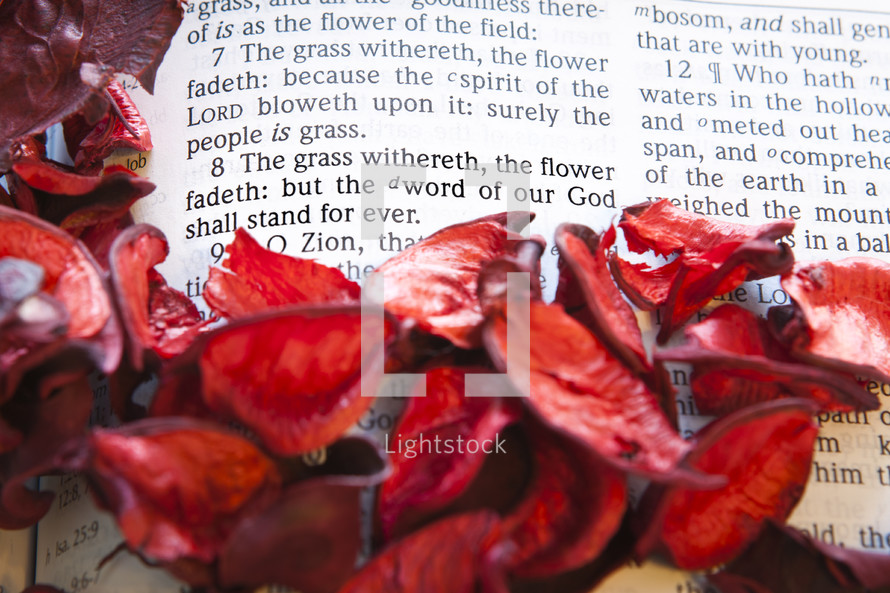 Red flower petals surrounding Bible page open to Isaiah 40:7-8.
