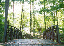 bridge on a path in a forest
