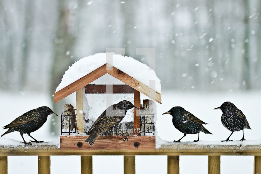 birds at a bird feeder covered in snow