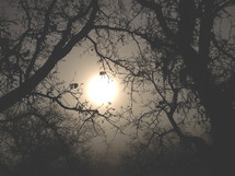 sun through fog and tree branches