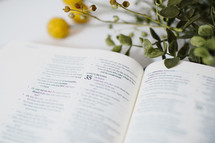 yellow flowers and pages of an open Bible