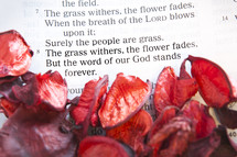 Red flower petals on top of Bible page open to Isaiah 40:8.