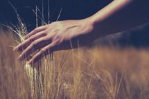 woman running her hand over tall grass