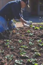 A man planting a garden.