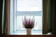 A pot of flowers sitting on a windowsill.
