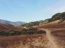 A long dirt path.