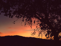 silhouette of a tree at dusk