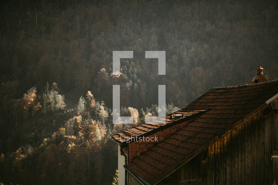 wood shingles on a roof and a mountainside forest