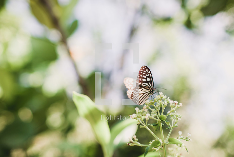 A brown and white butterfly on a flower blossom.